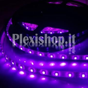 UV - Striscia LED UV 375-380nm SMD 5050