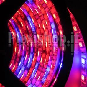 ROSSO+BLU - Bobina Striscia LED SMD 5050 60 Led/Metro IP65