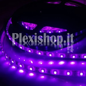 UV - Bobina Striscia LED SMD 5050 60 LedMetro IP65